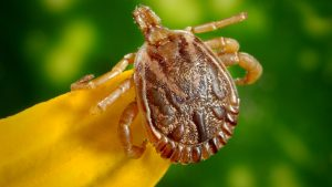 Twin Cities Lyme Foundation shares advice with Health Journal