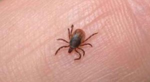 The Weather Channel's new podcast interviews Lisa Najarian about tick season precautions
